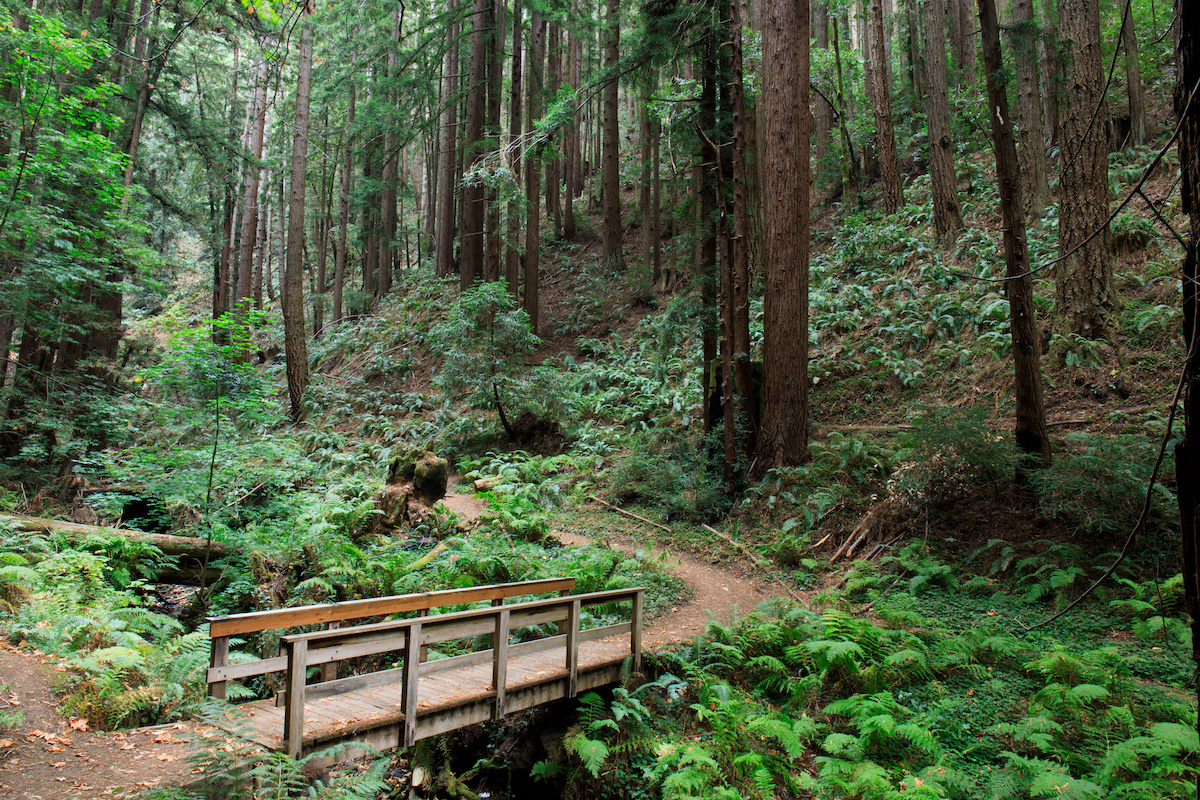 Trail through Purisima Creek Redwoods Open Space Preserve