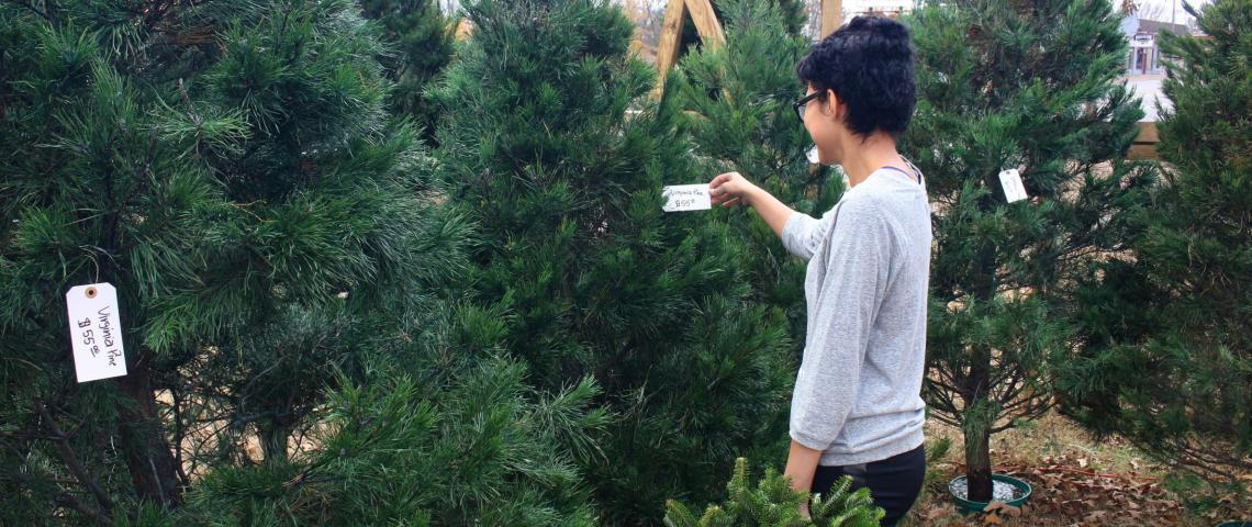 Christmas Tree Farms & Lots - Christmas Tree Farms & Lots: Bay Area