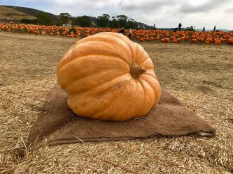 gigantic pumpkin