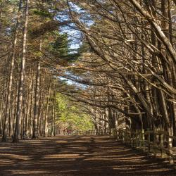 Cypress Forest, Moss Beach