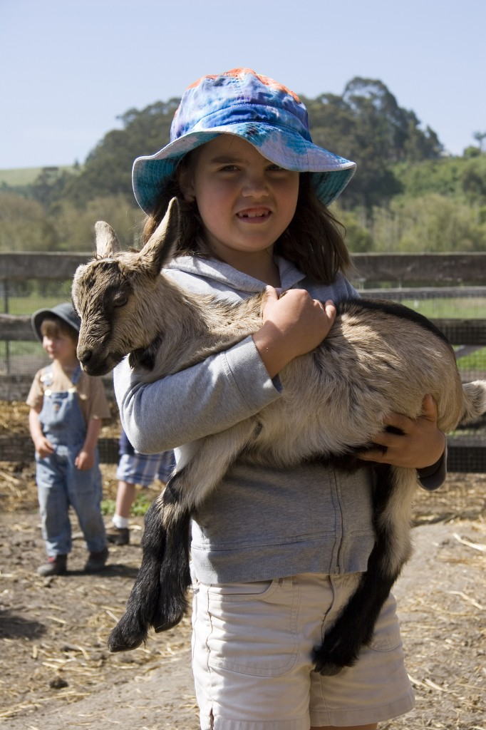harley farms goat