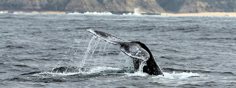 Bay Area Whale Watching Tours